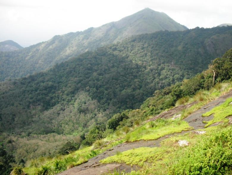 Karadippara View Point in Kerala