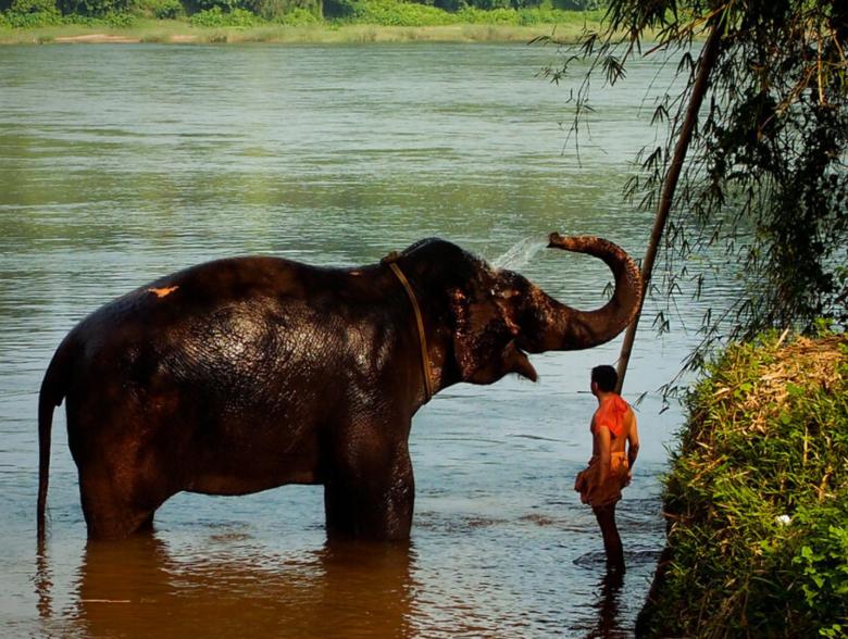Kodanad Elephant Sanctuary in Kerala