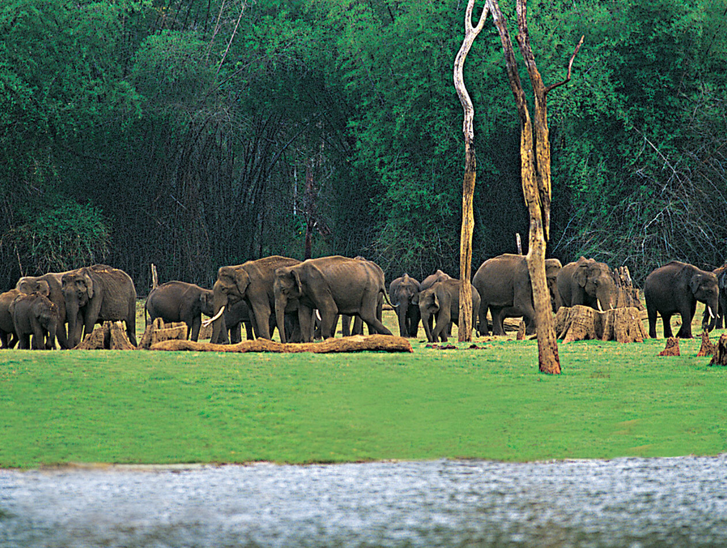 Thekkady_wildlife_sanctury