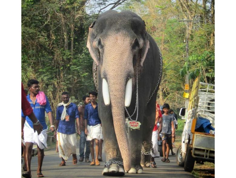 Cherupulassery Ananthapadmanaban
