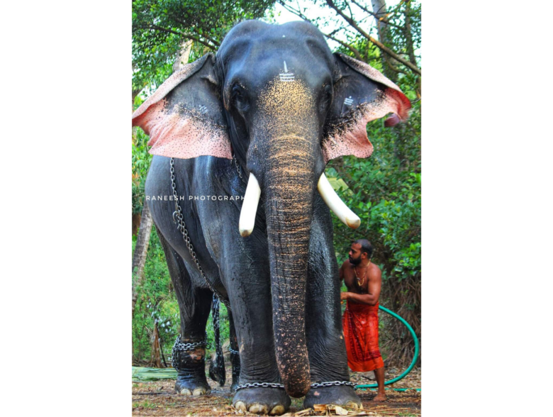 Top 10 Famous Elephants Living In Kerala India Kerala elephant png clipart is a handpicked free hd png images. 10 famous elephants living in kerala