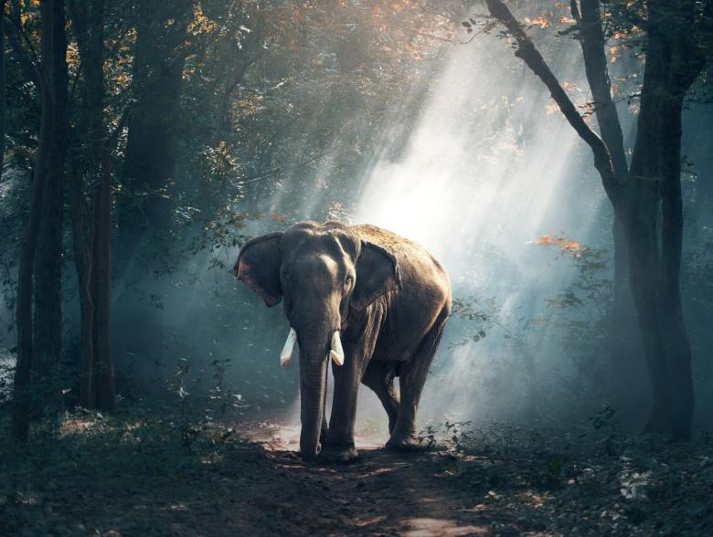 Elephants in Kerala
