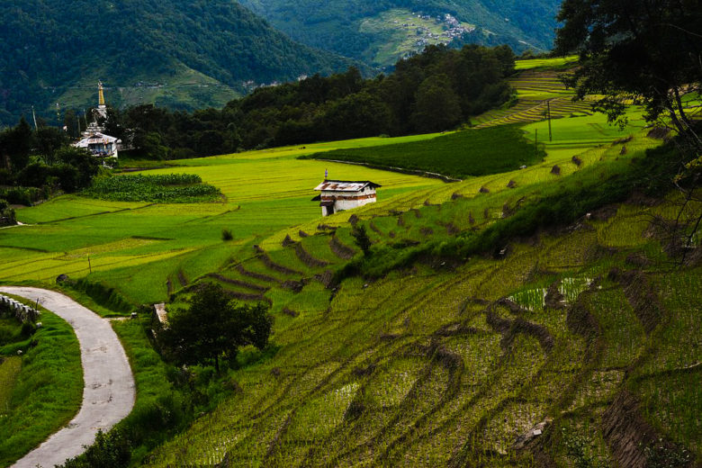 Paddy_fields_at_Ziro